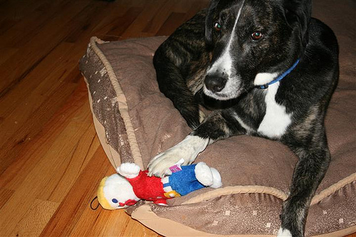 Funny Strange: Let's Talk About My Mr. Bill Dog Toy, Shall We?